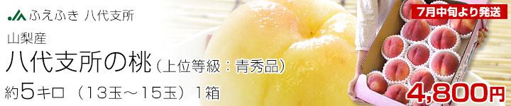 八代支所の桃