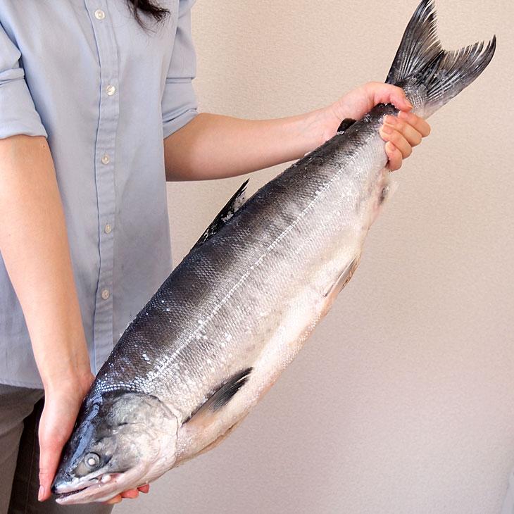 北海道加工 時鮭 1尾2.5キロ