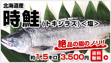 時鮭1.5kg