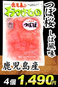 鹿児島産つぼ桜
