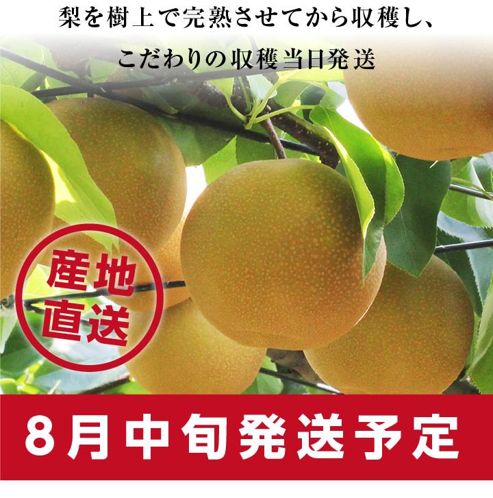 梨(なし)を樹上で完熟さえてから収穫しこだわりの当日発送。産地直送