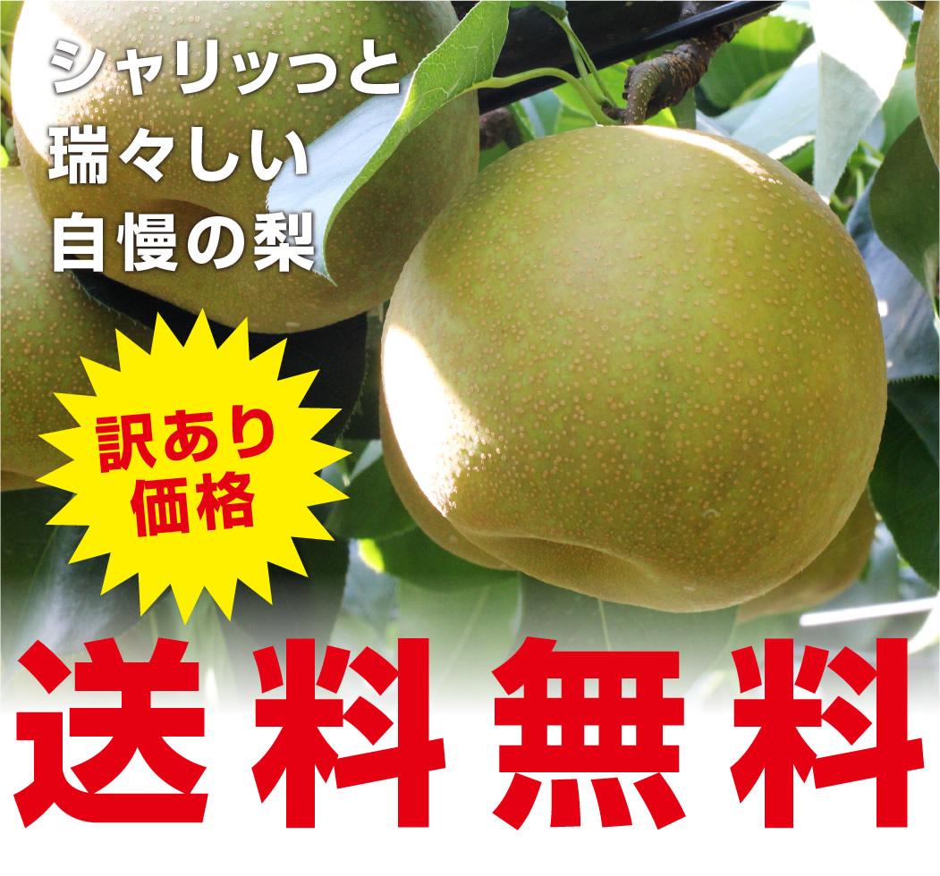 シャリッと瑞々しい自慢の梨を訳あり価格 送料無料