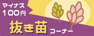【-100円】抜き苗コーナー