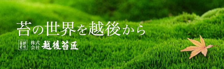 越後苔匠 - 懐かしく趣深い苔の世界を越後から