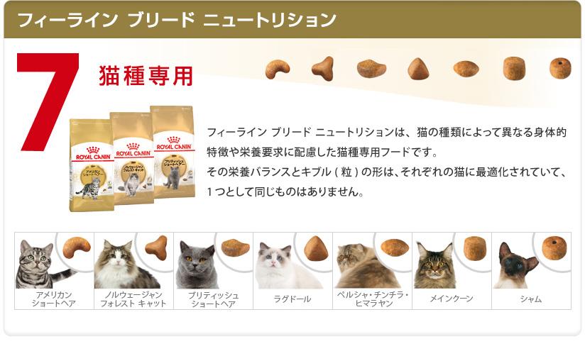 猫フィーラインブリードニュートリション