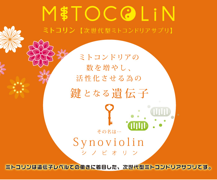 ミトコリン-ミトコンドリアの数を増やし、活性化