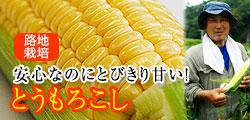和歌山県産のこだわりトウモロコシ!早朝収穫したものを必ず翌日お届け!