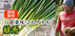 万能薬味ネギ!和歌山で自然の恵みを存分に浴びた青ネギ緑秀