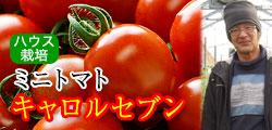 甘み、コク最高の出来栄え!ミニトマト キャロルセブン