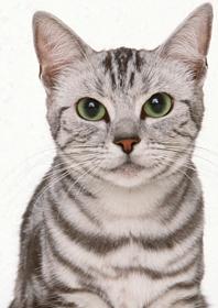 ロイヤルカナンのこだわり猫