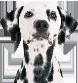 ロイヤルカナンのこだわり犬