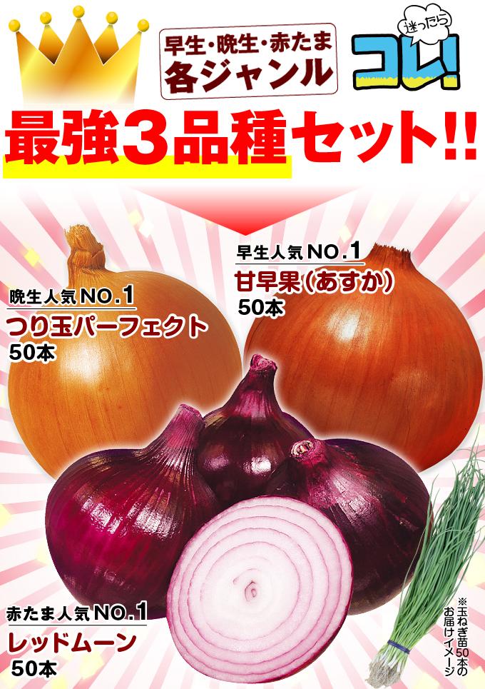 玉葱苗3種セット・メイン